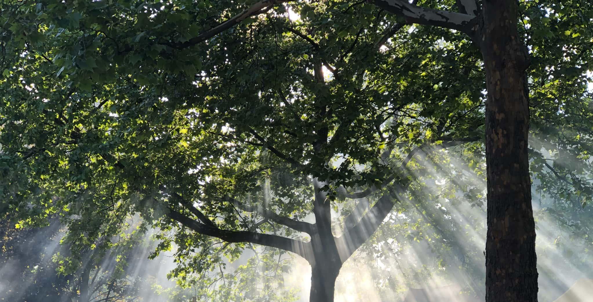 Sonne und Natur